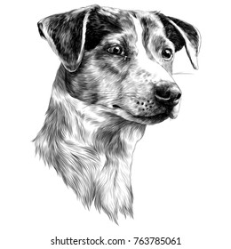 the dog head is the Jack Russell Terrier is a cheerful sketch vector graphics monochrome black-and-white drawing