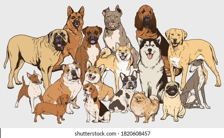 Dog illustration collection. Realistic vector illustrations of different breads of dogs. Each completed and isolated.