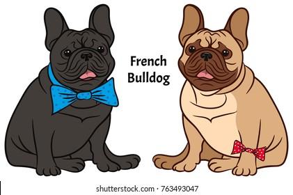 Dog illustration on a white background. Breed french bulldog.
