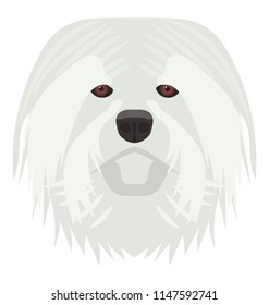 A dog from a large breed in snowy white color representing english sheepdog