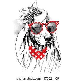 Dog with long ears portrait in a Elegant Women's hat with sunglasses. Vector illustration.