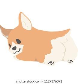 A dog looking back (corgi)