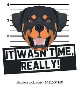 Dog Mugshot mug shot Rottweiler