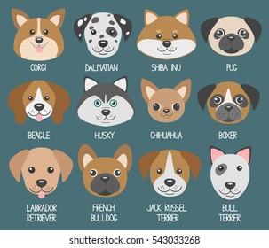 Dog muzzles. Different breeds: Beagle, dalmatian, shiba inu, husky, corgi, jack russell terrier, pug, chihuahua, labrador retriever, french bulldog
