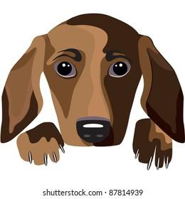 Dog on a white background. Vector illustration.
