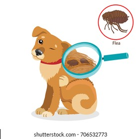 Dog Parasites. Flea On Dog In The Fur As A Close Up Magnification Vector. Spread Of Infection. Pet Veterinary Medicine Vector.