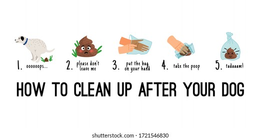 Dog poo clean up. Dogs poop pick up on bag steps infographics, pet toilet waste litter cleaning cartoon vector illustration
