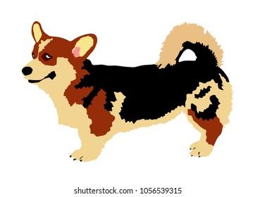 Dog portrait of Welsh corgi Cardigan vector illustration isolated. Beware of dog. man's best friend. Lovely pet.
