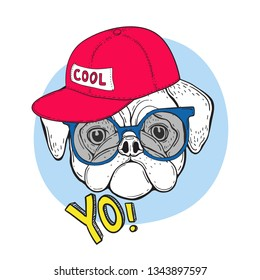 Dog pug in blue sunglasses and a red cap with the inscription cool. And the slogan YO. Vector illustration for t-shirt design. T-shirt print. Merch.