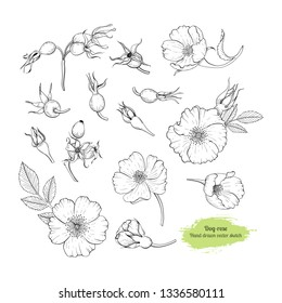 Dog rose hand drawn set - flowers and berries. Healing tea and medical berry. Design for medicine and cosmetic package design.