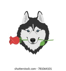 Dog with rose in mouth. Black and white Siberian husky with blue eyes. Greeting card for Valentine's day, women's day, mother's day, birthday. Vector illustration