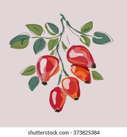 Dog Rose. Red Berry brunch. Isolated vector illustration.