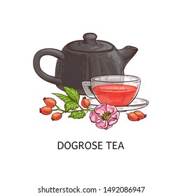 Dog rose tea - berry fruit beverage drawing in glass teacup and brown teapot with red berries, pink flower and green leaves on a branch, hand drawn isolated herbal drink still vector illustration