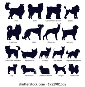 Dog silhouettes. Various breed. Doberman, malamute and labrador, poodle and corgi, bulldog and pug. Isolated vector set. Collection of pets or domestic animals as collie, akita and dachshund