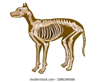 Dog Skeletal Anatomy Poster. CANINE ANATOMY