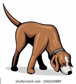 Dog sniff the ground, vector image.