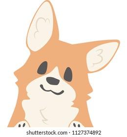 A dog that peeps at the face (corgi)