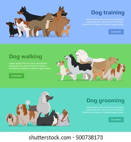 Dog training, walking and grooming. Long haired breeds of different size. Sportive and athletics ones. Pet shop banner poster. Vector design illustration in flat style