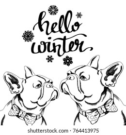 dog vector illustration breed french bulldog big ears funny dog