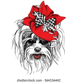Dog Yorkie portrait in a red Elegant women's hat with bow and ribbon. Vector illustration.