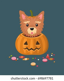 Dog of the Yorkshire Terrier breed. The puppy sits in a festive Halloween  pumpkin. Around the dog are scattered candy and sweets.