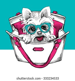 Dog Yorkshire terrier with glasses in a bag. Vector illustration.
