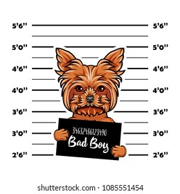 Dog Yorkshire terrier Prisoner, convict. Bad doy. Dog criminal. Police placard, Police mugshot, lineup. Arrest photo. Mugshot photo. Vector illustration.