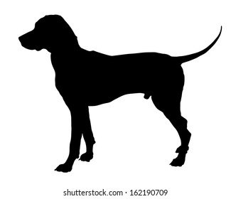 Dog,dalmatian breed,vector silhouette isolated on white background. Black silhouette od hunter dog.