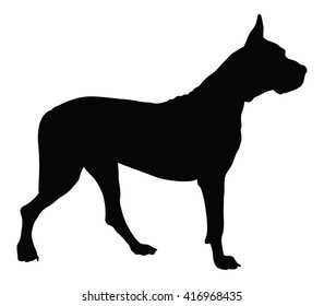 Dogo Argentino - Argentine Mastiff - purebred dog standing in side view - vector silhouette isolated. the Argentine, great Dane, Mastiff, the dog. Black dog silhouette.