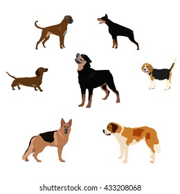 Dogs breed set with bull terrier boxer poodle isolated vector