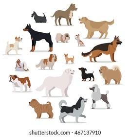 狗品种设置隔离在白色。 收集大小小的小狗. 不同类型的狗。 受欢迎的狗犬种展览。 在卡通风格的血系动物. 矢量插图