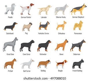 Dogs breed vector flat icons set. Pets animal, labrador and siberian husky, dachshund and yorkshire terrier illustration