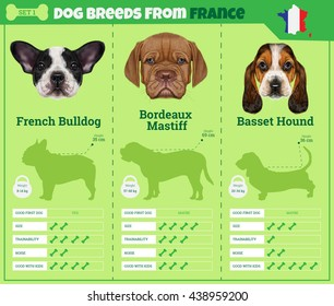 Dogs breed vector info graphics types of dog breeds from France. Breed Set 1 - French Bulldog, Bordeaux Mastiff, Basset Hound