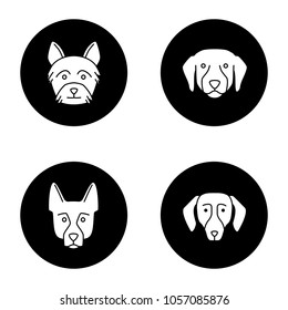 Dogs breeds glyph icons set. Yorkshire Terrier, Labrador Retriever, German Shepherd, dachshund. Vector white silhouettes illustrations in black circles