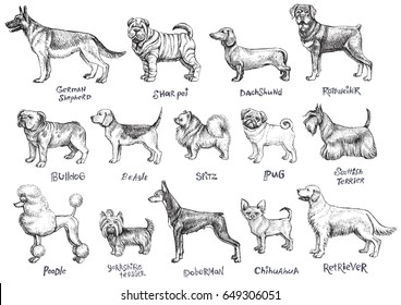 Dogs breeds vector set. Freehand drawing illustration in vintage style.