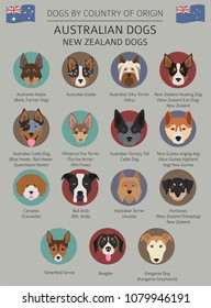Dogs by country of origin. Australian dog breeds, New Zealand dogs. Infographic template. Vector illustration