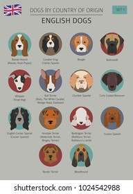 Dogs by country of origin. English dog breeds. Infographic template. Vector illustration. Vector illustration