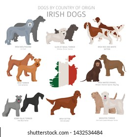 Dogs by country of origin. Irish dog breeds. Shepherds, hunting, herding, toy, working and service dogs  set.  Vector illustration