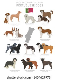 Dogs by country of origin. Portugal dog breeds. Shepherds, hunting, herding, toy, working and service dogs  set.  Vector illustration