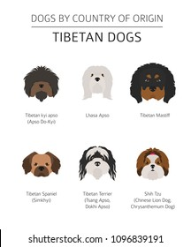 Dogs by country of origin. Tibetan dog breeds, chinese mountain dogs. Infographic template. Vector illustration