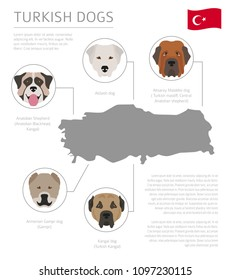 Dogs by country of origin. Turkish dog breeds. Infographic template. Vector illustration