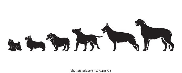 Dogs by size - vector illustration