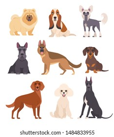 Dogs collection. Vector illustration of various breeds of dogs, such as chow chow, mini poodle, basset hound, chinese crested dog and other. Isolated on white.