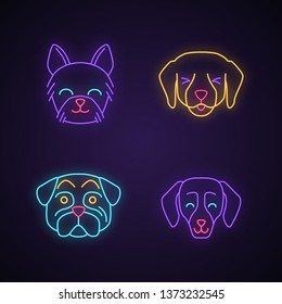 Dogs cute kawaii neon light characters. Animals with smiling muzzles. Happy Yorkshire Terrier. Funny emoji, emoticon set. Glowing icons with alphabet, numbers, symbols. Vector isolated illustration