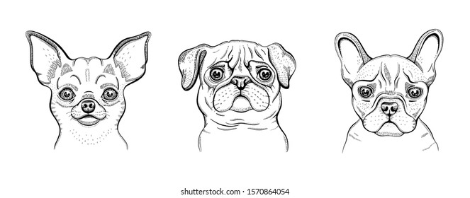 Dogs, cute line set. Chihuahua, pug, bulldog engraved design collection. Cool animal vector in doodle hand drawn style for poster, coloring book, print, tattoo. Trendy hipster vector illustration art