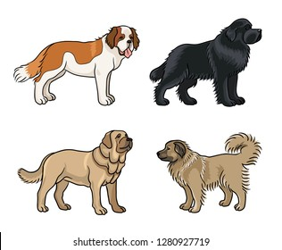 Dogs of different breeds in color (St. Bernard, Newfoundland, Spanish mastiff, Caucasian shepherd) - vector illustration