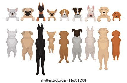 Dogs of different breeds hanging on border. Portraits of muzzles with paws and full bodies. Front and back view. Flat vector design