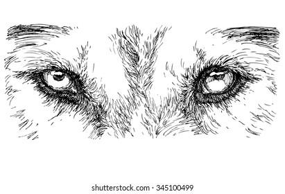 Dog's eyes - hand drawn vector illustration, isolated on white