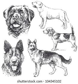 dogs - hand drawn set