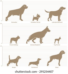 Dogs on the dimensional scale. Vector illustration.